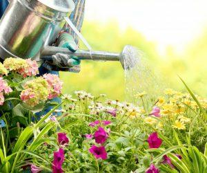 watering flowers in garden centre