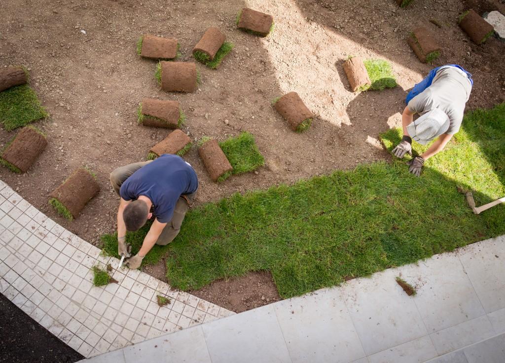 Gardener Installing Natural Grass TurfCreating Beautiful Lawn Field
